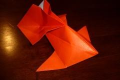 318RomanDiazGoldfish