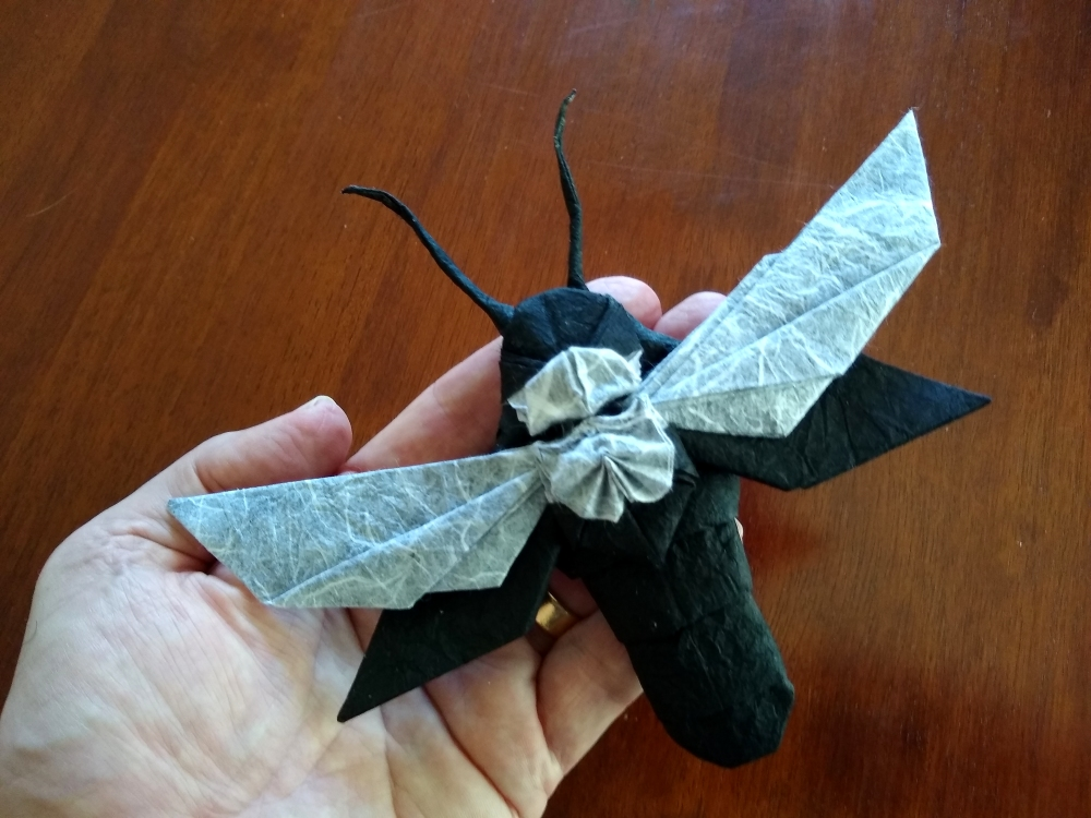 Deaths-head Hawkwing Moth scale