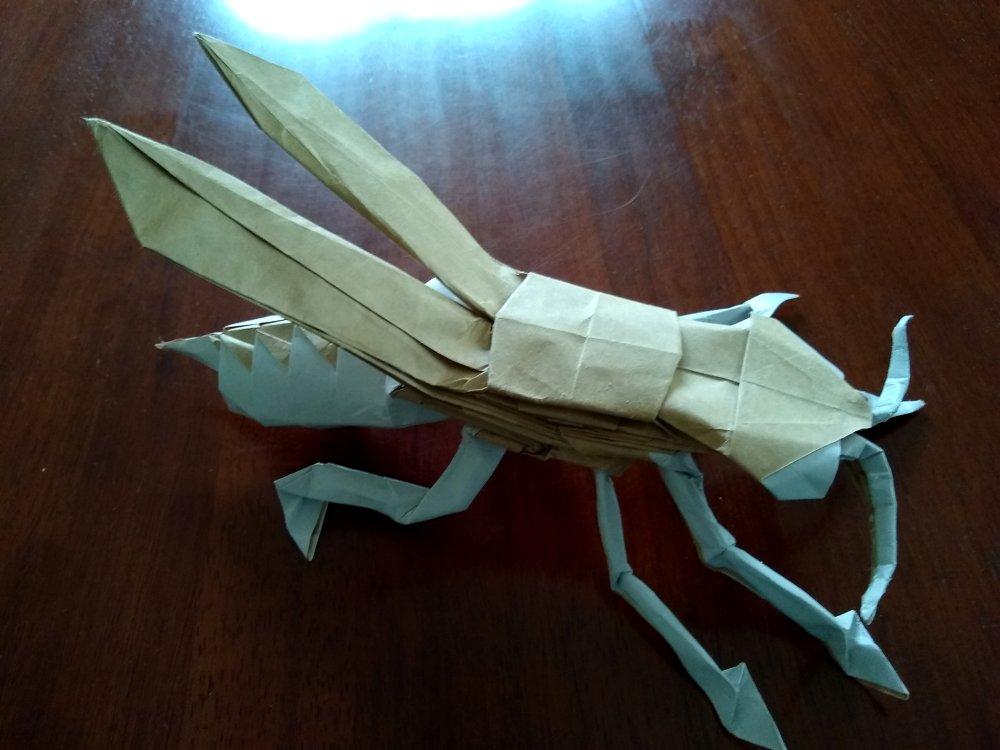 Stephen O'Hanlon's Wasp
