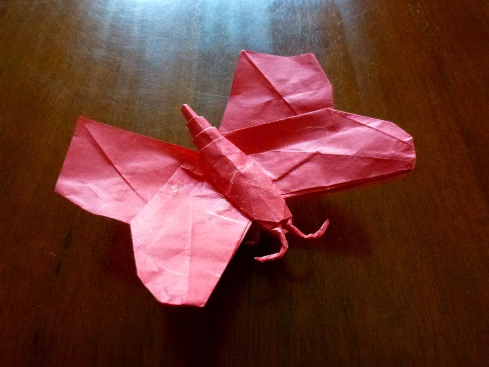 Montroll's butterfly