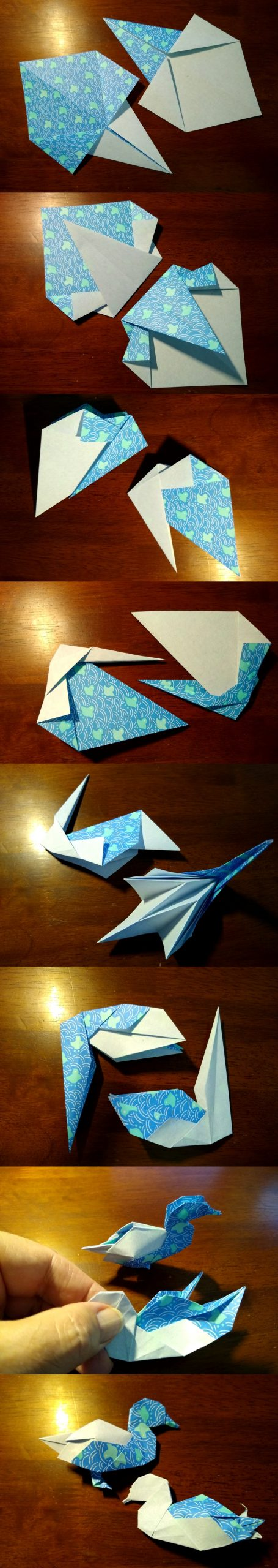 Shiri Daniel's Ducks development