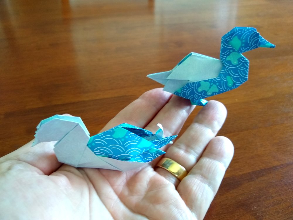 Shiri Daniel's Ducks scale