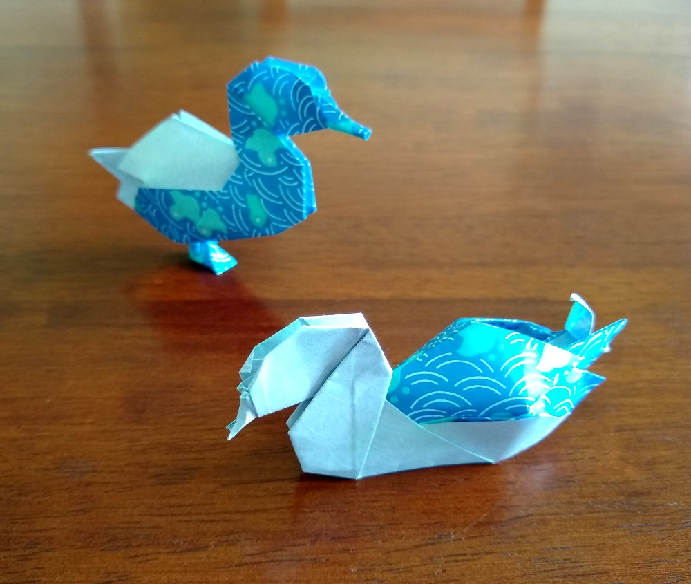 Shiri Daniel's Ducks view